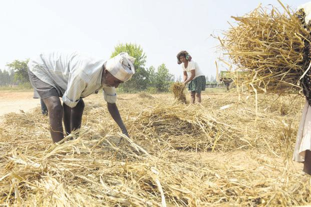 How farmers in India are adapting to climate change