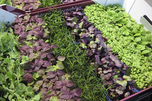 The microgreens revolution originated in the heart of the nouvelle cuisine state of the US, California. Photo: iStockphoto